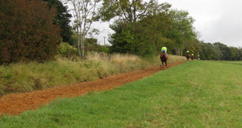 Woodchip-gallop3-new
